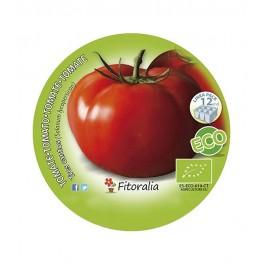 Plantel de tomate Tres Cantos ecológico (12 unidades)