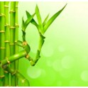 Caña de bambú recta