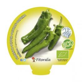 Plantel de pimiento italiano ecológico (12 unidades)
