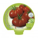 Plantel de tomate Raf ecológico (12 unidades)