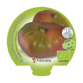 Plantel de tomate Rosa ecológico (12 unidades)