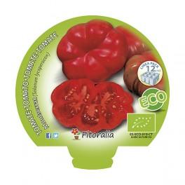 Plantel de tomate Montserrat ecológico (12 unidades)