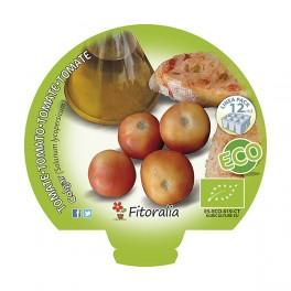 Plantel de tomate de colgar ecológico (12 unidades)