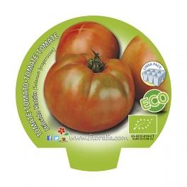 Plantel de tomate híbrido Katón ecológico (12 unidades)