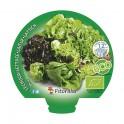 Planter d'enciam mix ecològic (12 unitats)