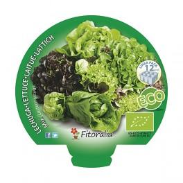 Plantel lechuga mix ecológico (12 unidades)