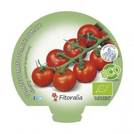 Plantel de tomate cherry ecológico (12 unidades)