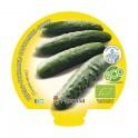 Plantel pepino ecológico (6 unidades)