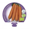 Plantel zanahoria ecológico (12 unidades)