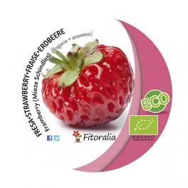 Fresa Framberry ecológica (maceta 10,5 cm Ø)