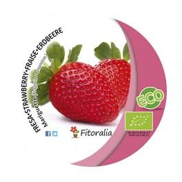Fresa Mariguette ecológica (maceta 10,5 cm Ø)