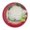 Plantel coliflor blanca ecológica (12 unidades)