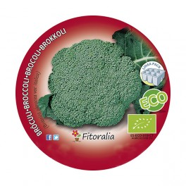Plantel brócoli verde ecológico (12 unidades)