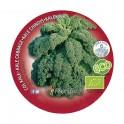 Plantel col Kale ecológico (12 unidades)
