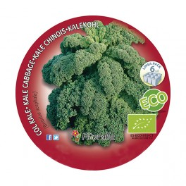 Plantel col Kale ecológico (6 unidades)