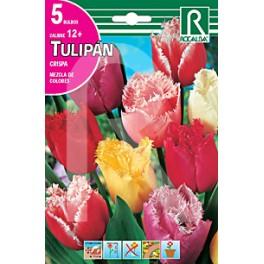 Bulbo de tulipán crispa variado (bolsa 5 unidades)