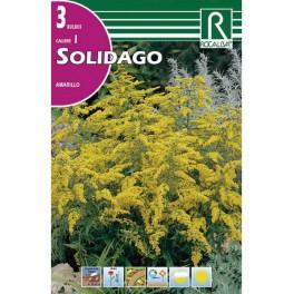 Bulbo de Solidago (3 unidades) Rocalba