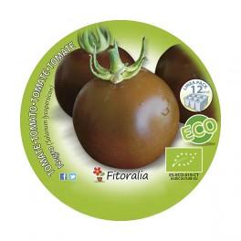Plantel de tomate Negro ecológico (12 unidades)