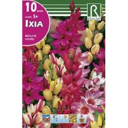 Bulbo de ixias (Bolsa de 10 unidades)