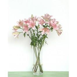 Lilium rosa claro