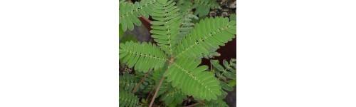 Planta pequeña verde