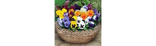 Otras plantas de temprorada con flor