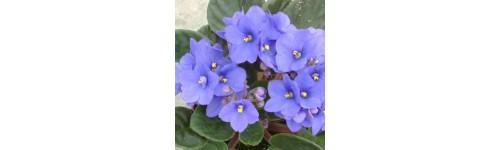 Planta de interior con flor