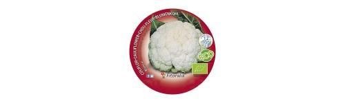 Plantel coles, coliflor i brocoli